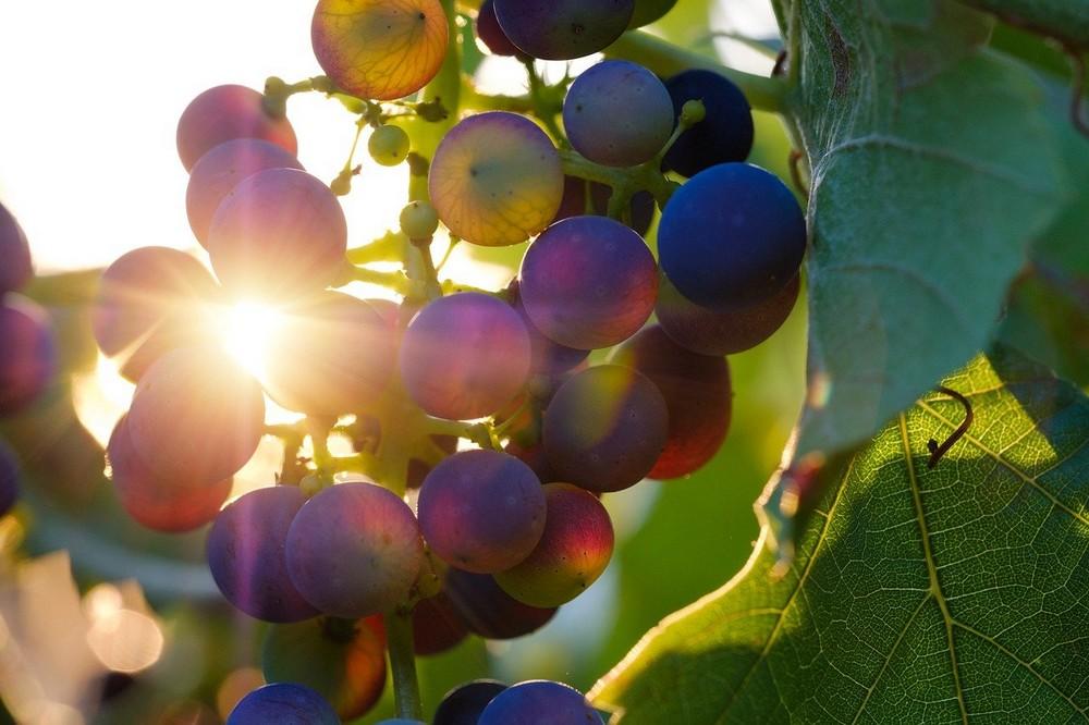 Ga op wijnreis door Europa met deze prachtige wijne